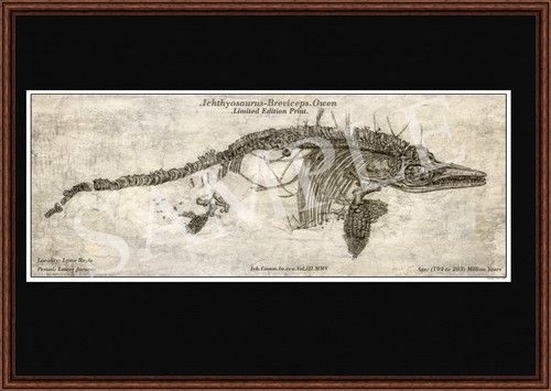 A3 Illustrated Fossil Print Ichthyosaur Breviceps