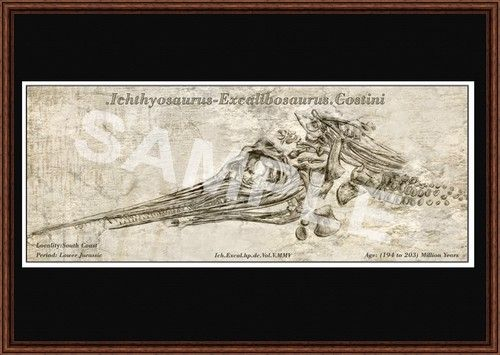 A3 Illustrated Fossil Print Ichthyosaur Excalibosaurus Costini | Fossil Illustration Prints - Interior Design | naturalselectionfossils.com