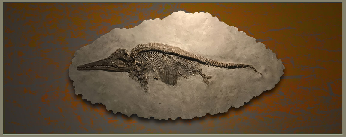 High Quality Replica Fossils for sale